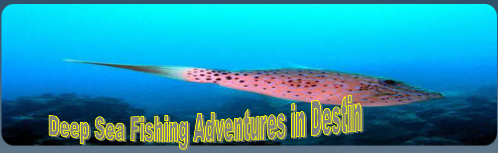 Deep sea fishing in destin for Deep sea fishing in destin fl